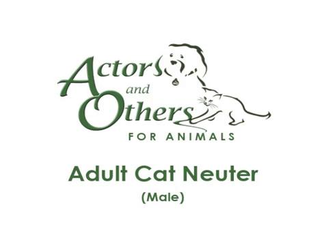 Adult_Cat_Neuter