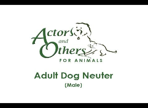 Adult_Dog_Neuter