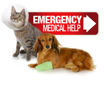 Emergency Medical Assistance
